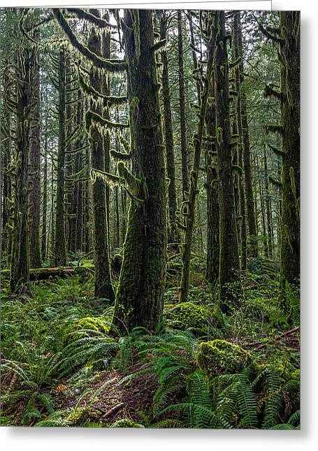 Rain Forest Of Golden Ears Greeting Card by Pierre Leclerc Photography