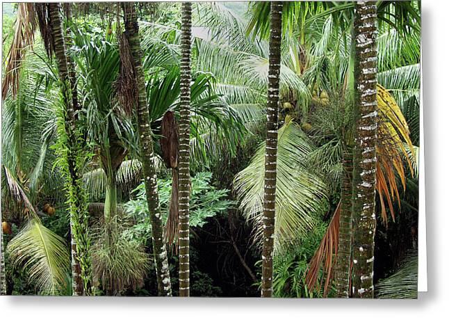 Rain Forest Palau Greeting Card