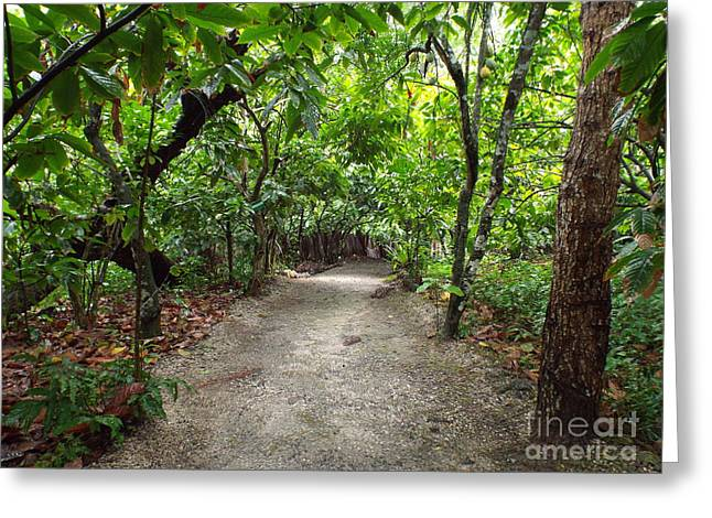 Rain Forest Road Greeting Card