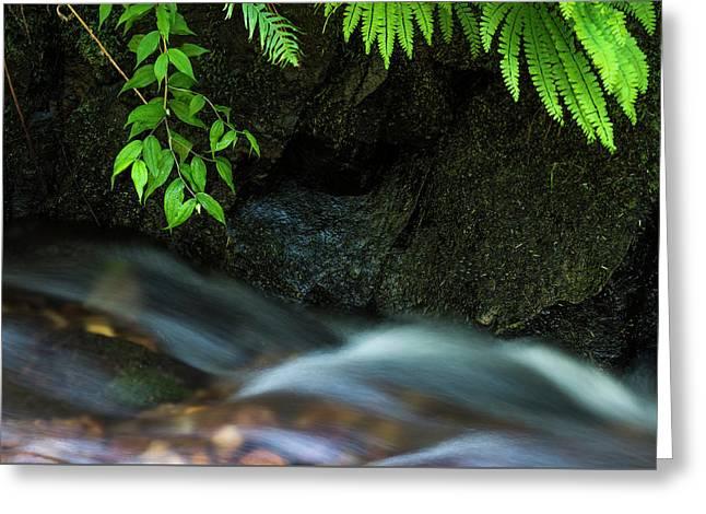 Rain Forest Stream Greeting Card