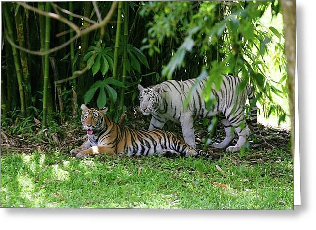 Rain Forest Tigers Greeting Card