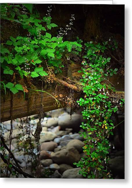 Rain Forest Walk Greeting Card