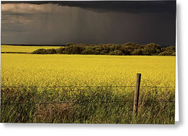 Colorful Cloud Formations Greeting Cards - Rain front approaching Saskatchewan canola crop Greeting Card by Mark Duffy