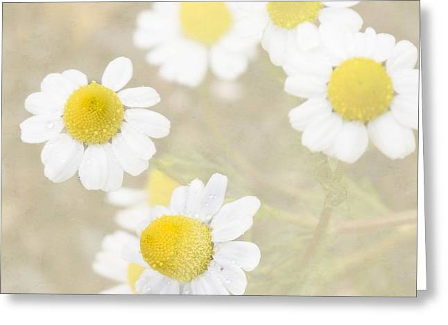 Rain-kissed Chamomile Greeting Card