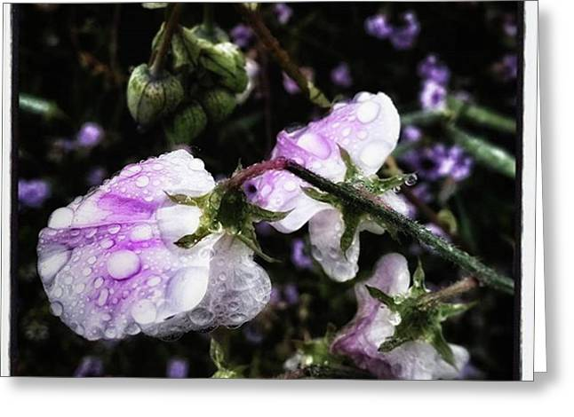 Greeting Card featuring the photograph Rain Kissed Petals. This Flower Art by Mr Photojimsf