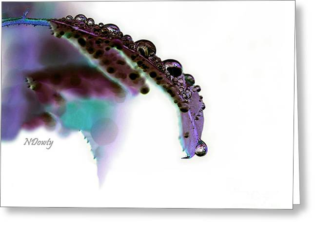 Rain On Rose Leaf Abstract Greeting Card
