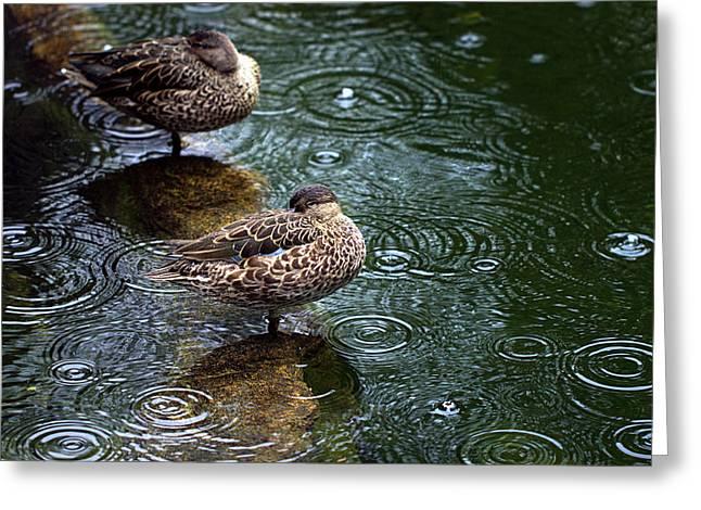 Rain Rain Go Away Greeting Card by Joseph Skompski