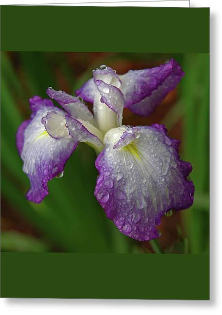Rain-soaked Iris Greeting Card