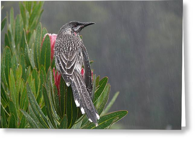 Rainbird Greeting Card