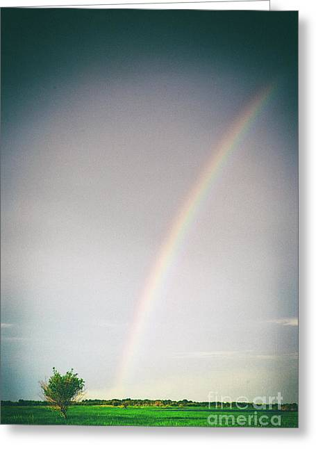 Rainbow #0157 Greeting Card