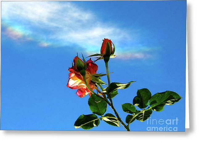 Rainbow Cloud And Sunlit Roses Greeting Card