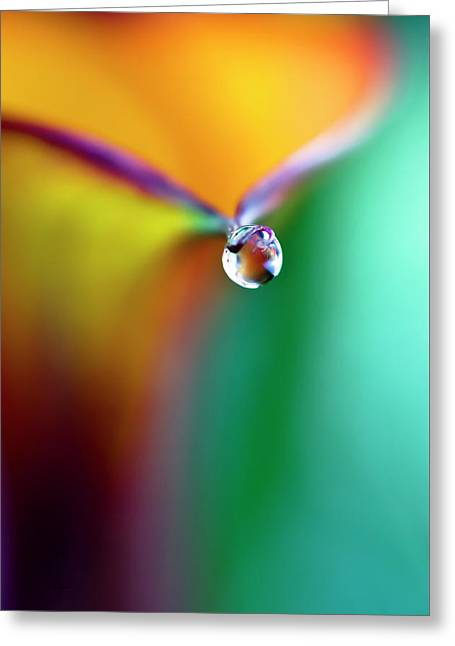 Rainbow Drop Greeting Card by Crystal Wightman