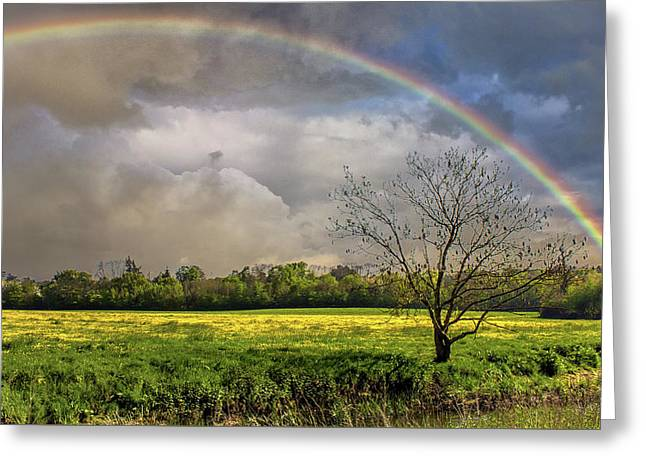 Rainbow Field Greeting Card by Martin Newman