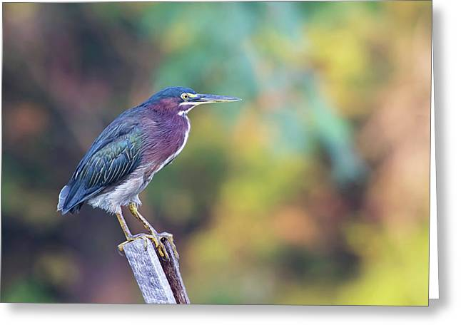 Rainbow Heron Greeting Card