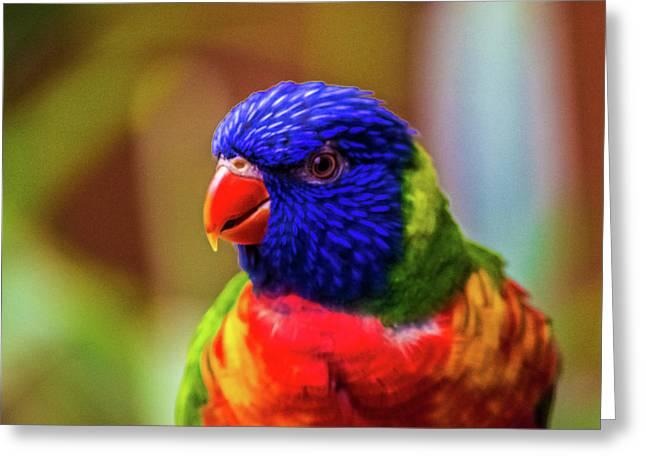 Rainbow Lorikeet Greeting Card by Martin Newman
