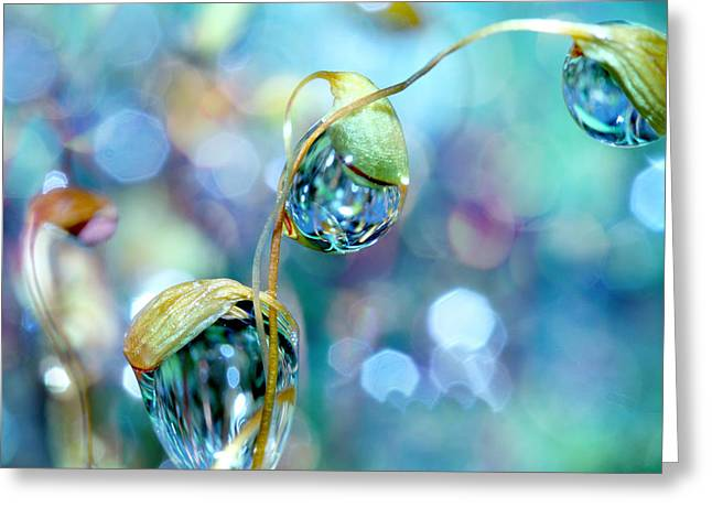 Moss Greeting Cards - Rainbow Moss Drops Greeting Card by Sharon Johnstone