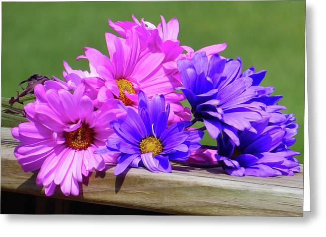 Rainbow Mums 2 Of 5 Greeting Card by Tina M Wenger