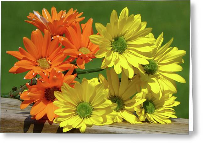 Rainbow Mums 4 Of 5 Greeting Card by Tina M Wenger