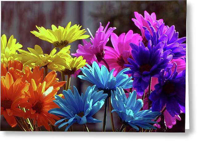 Rainbow Mums 5 Of 5 Greeting Card by Tina M Wenger