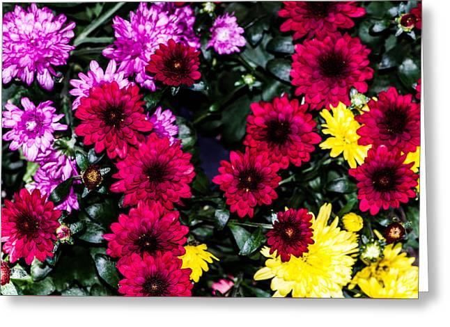 Rainbow Of Color Flowers Greeting Card