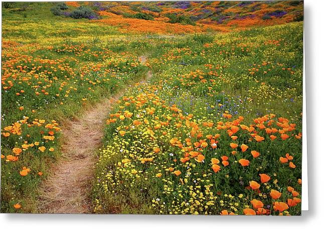 Greeting Card featuring the photograph Rainbow Of Wildflowers Bloom Near Diamond Lake In California by Jetson Nguyen