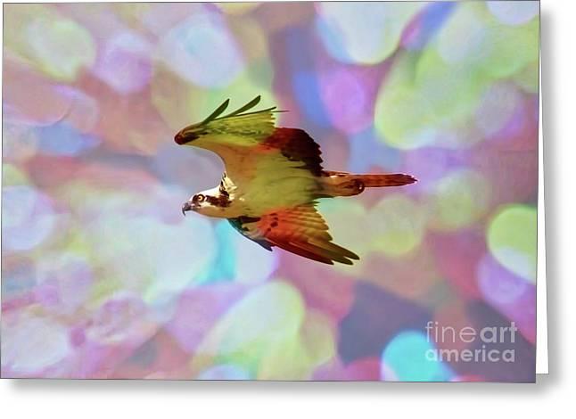 Rainbow Osprey Greeting Card by Carol Groenen