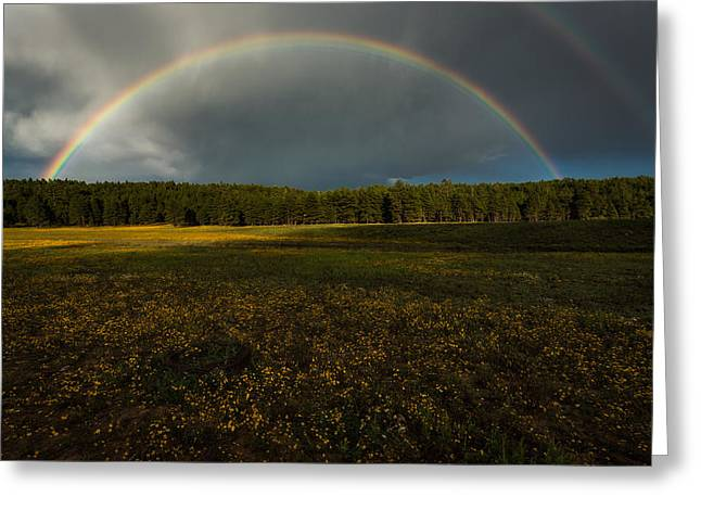 Rainbow Over The Forest Greeting Card