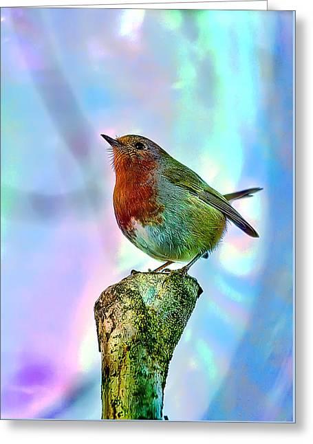 Rainbow Robin Greeting Card