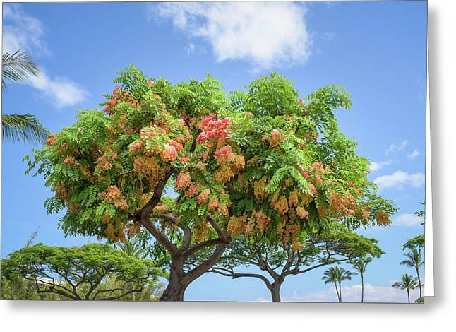 Greeting Card featuring the photograph Rainbow Shower Tree 1 by Jim Thompson