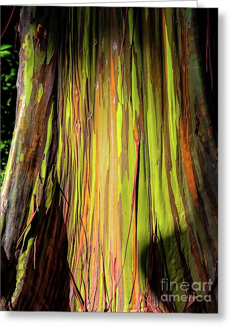 Rainbow Tree Greeting Card by Jon Burch Photography