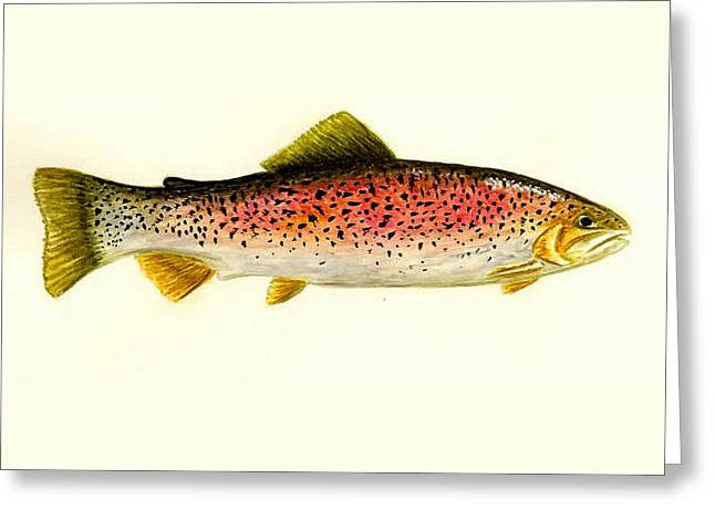 Rainbow Trout Greeting Card by Michael Vigliotti