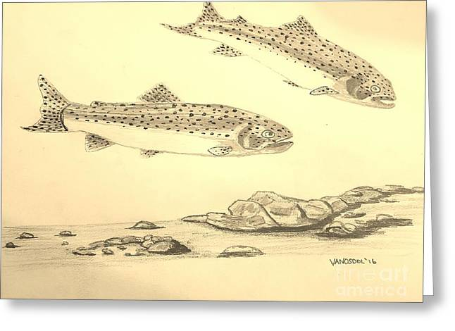 Rainbow Trout Scene - Sepia Greeting Card by Scott D Van Osdol