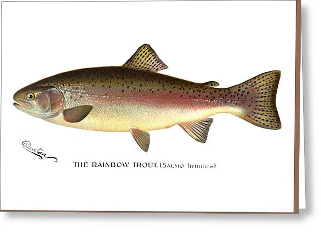 Rainbow Trout Greeting Card by Sherman Foote Denton