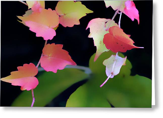 Rainbow Vine Leaves Greeting Card