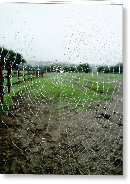 Raincatcher Web Greeting Card