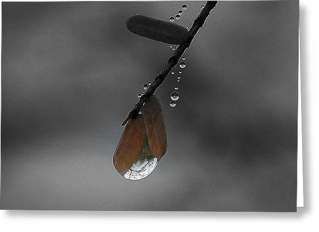Raindrop Art.... Greeting Card