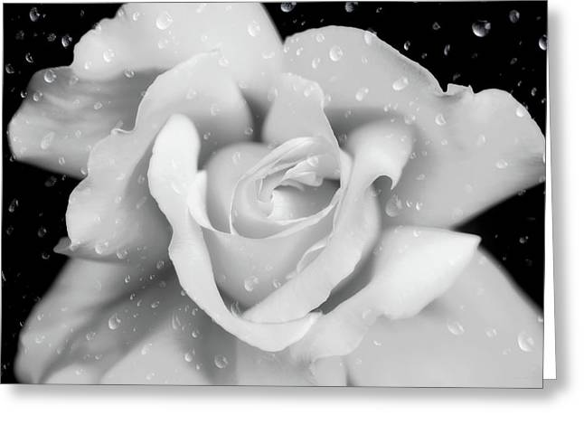 Greeting Card featuring the photograph Raindrops On Rose Black And White by Jennie Marie Schell