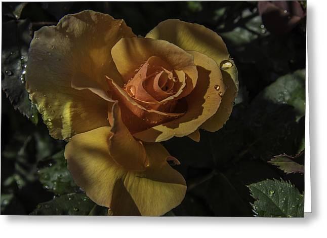 Raindrop Rose Greeting Card