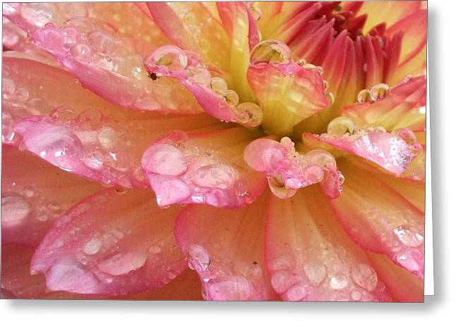 Raindrops Greeting Card by Deborah Brewer