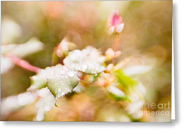 Raindrops Glisten Greeting Card by Lisa McStamp