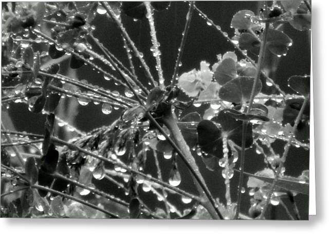 Raindrops In Abstract Greeting Card by Wild Thing
