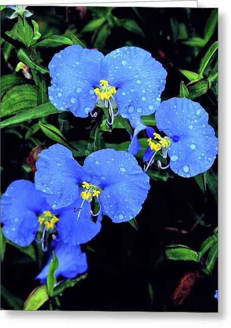 Raindrops In Blue Greeting Card by Peg Urban