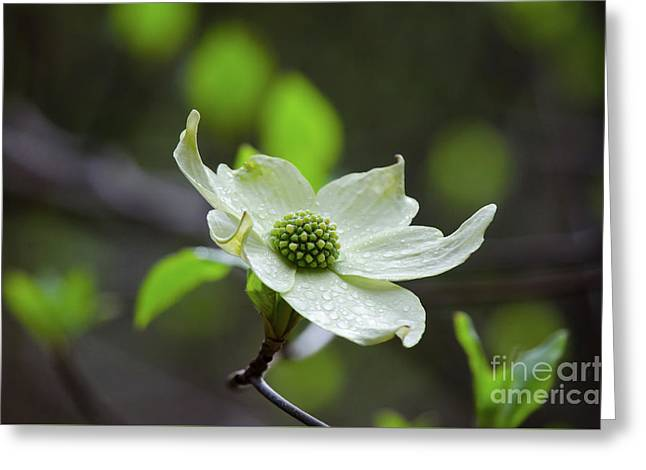 Raindrops Keep Falling Greeting Card by Debby Pueschel