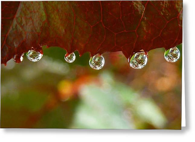 Raindrops On A Red Leaf Greeting Card