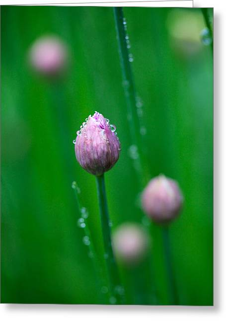 Raindrops On Chive Flowers Greeting Card