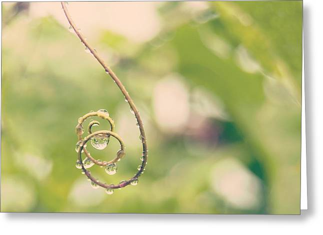 Raindrops On Curled Lilikoi Tendril - Hipster Photo Square Greeting Card