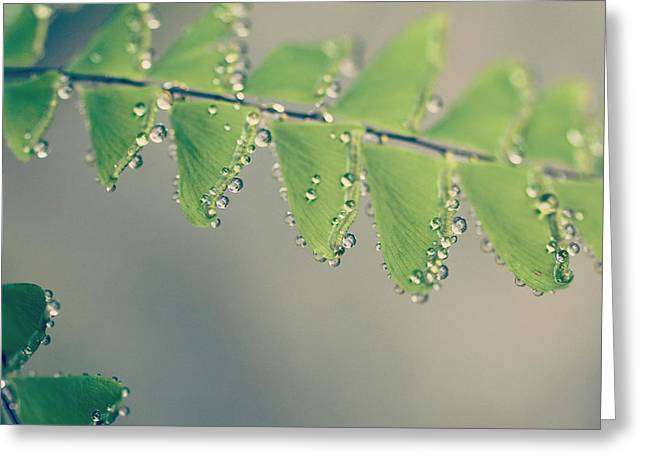 Raindrops On Ferns - Hipster Photo Square Greeting Card