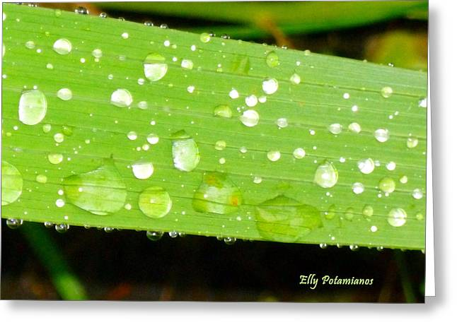 Raindrops On Leaf Greeting Card