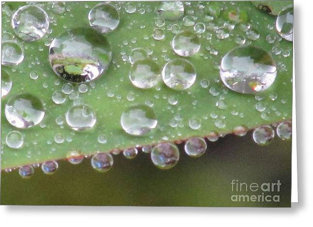 Raindrops On Leaf. Greeting Card by Kim Tran