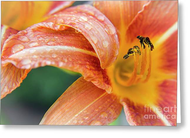 Raindrops On Lilies Greeting Card